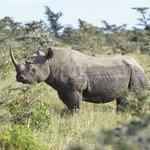 Close to rhino