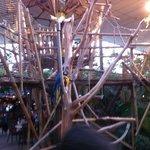 Papagaaien in het plaza