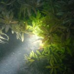 Night diving with the crayfish!