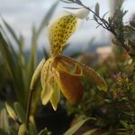 Nice pitcher plant flower in hotel terrace