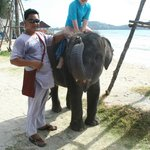 L'elefantino