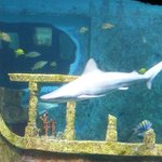 A shark in the tank