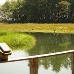 wetlands view