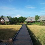 walk path on the paddy fields