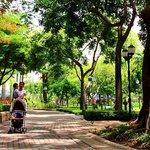 Shady Park
