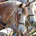 Meet our Horses!