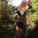 The boys and their llamas
