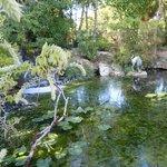The Japanese Garden 1