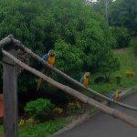 Amazing wild birds all aroundl