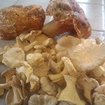 Fresh Mushrooms at Boreas