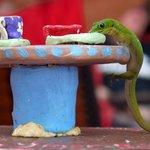 Gecko Diner at Kope Lani!