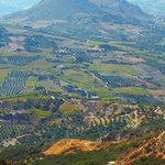 Lush plataeus of Olive trees and vineyards 1,000 ft up!