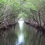 Canal through the mangrove forest