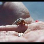 Laughing Bird Caye National Park