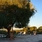 Olive tree and playing ground