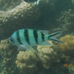 koh taen, typical fish under water