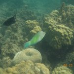 koh taen, colorful fishes
