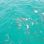 koh taen (koh tan) snorkeling