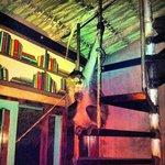 Resident hostel monkey