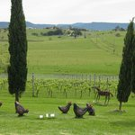 View from the winery - ceramic chooks in foreground