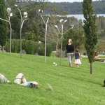 View from the winery - art in foreground