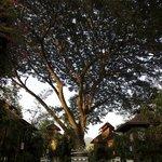 Villa under the rain tree on the edge of river Pai