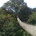 The Canopy Walkway.  My wife was fine.  I was happy to go up and happy to come down!