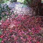 Hermosa flora del jardín botánico