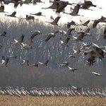 Le Der: un obseervatoire idéal pour les oiseaux