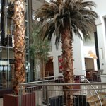 Who expects a palm tree in the lobby of a hotel in Galway?
