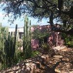gardens approaching casita