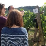 Was able to tie this row of grapes with the wine we were tasting and loving!!