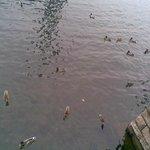on traverse,on est sur le lago Maggiore