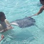 Feeding the Eagle Rays