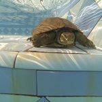 Notre compagnon de piscine!