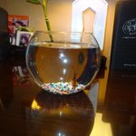 Our pet fish while we were there!