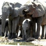 Family of Elephants at watering hole.
