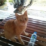 lovely cat