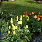 nice tulip gardem