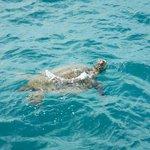 Turtle sighting!