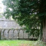 the Courtyard and tree