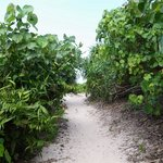 海への道は、熱帯植物が生い茂り