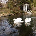 swan pond at Morris Arboretum