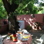 Yini's back yard and Mango tree