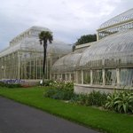 Some of the Glasshouses
