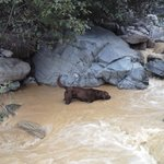 Rowdy, the lodge dog is a good hiking companion
