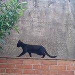 Vacker kattgranne.