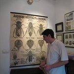 bee/wine museum