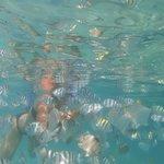 sous l'eau, à quelques metres du bord...