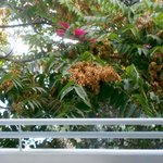 trees outside our balcony